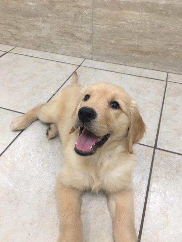 Puppy Day!